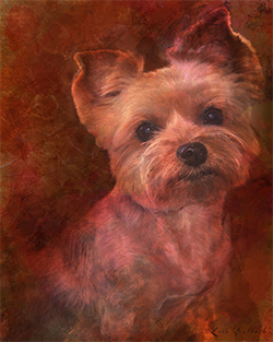 Mixed Media Yorkie